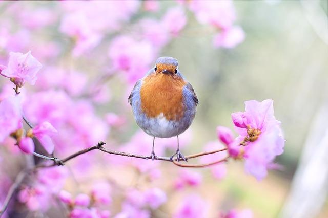 ptáček na stromě